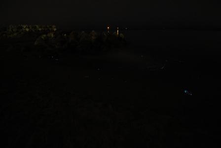 浜黒崎_ホタルイカ_20160504_IMG_9527.jpg